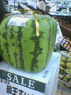Square-shaped melon!